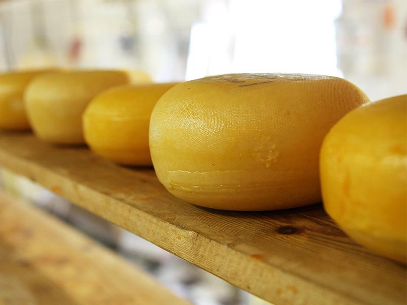 Alles Käse? BdV nominiert unsinnige Versicherungen