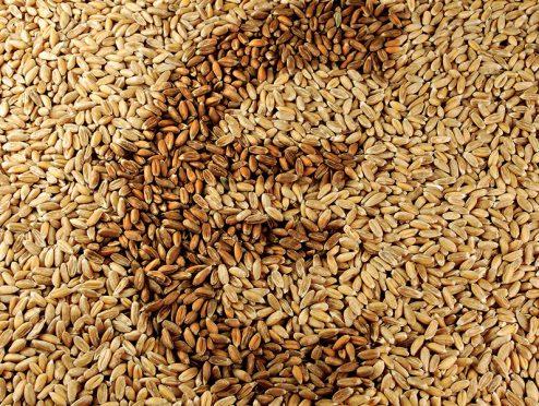 Fällt der Höchstrechnungszins, trennen sich Spreu und Weizen *