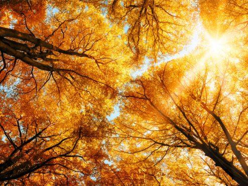 Helvetia Versicherung spendet Bäume für die Bergwaldoffensive