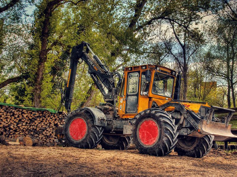 Haftung bei Baumfällaktion