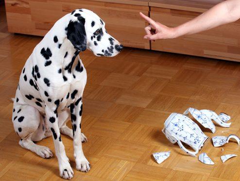 Hund außer Rand und Band – wer zahlt's?