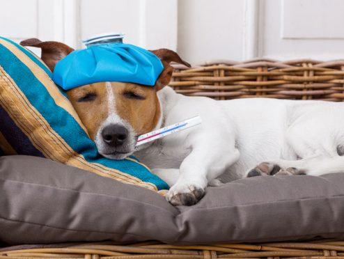 Für Hund und Katz: gleich online versichern