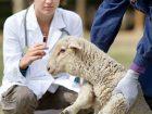 Tierärzte: hilfreiche Zusammenarbeit mit Versicherer