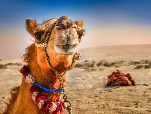 Aus dem Reiserecht: Der Sturz vom Kamel