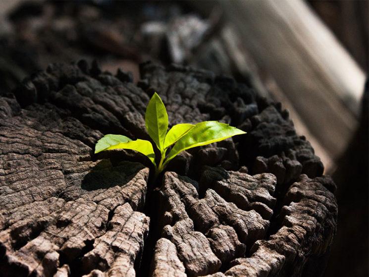 vigo & grün versichert: Nachhaltigkeit im Fokus