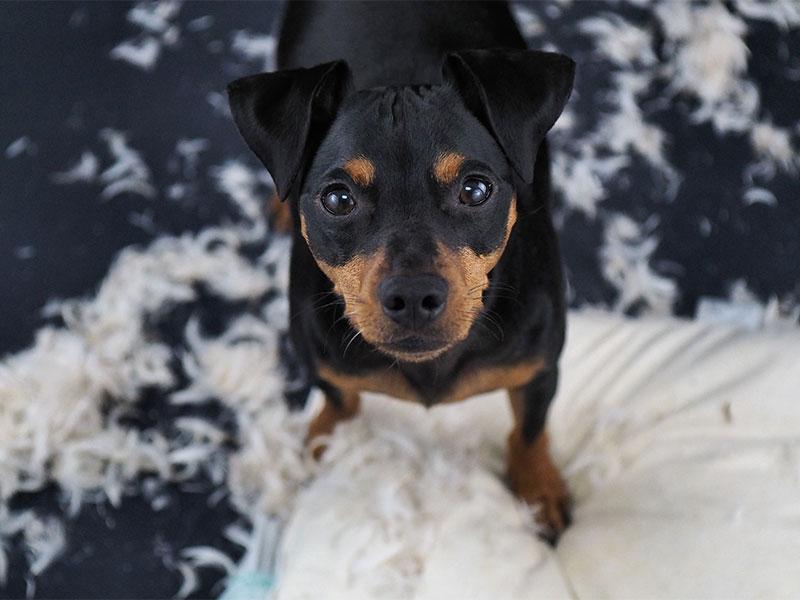 Tierisch abgesichert – die Tierhalterhaftpflichtversicherung