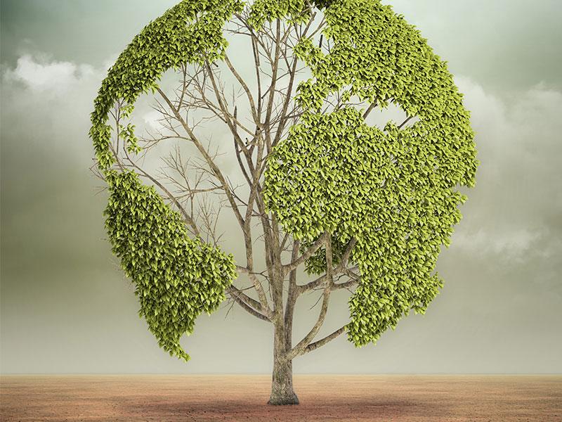Die Welt wird grüner