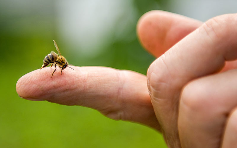 Kein Schmerzensgeld wegen Bienenstich im ländlichen Raum