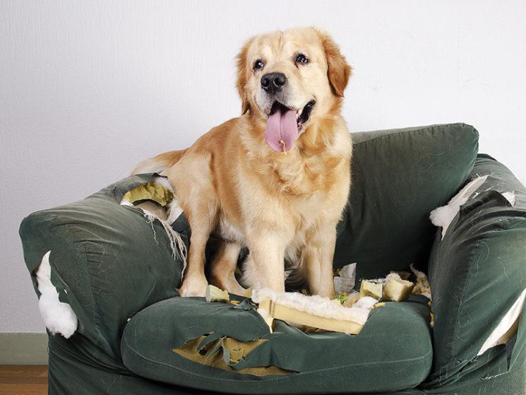 Haftpflichtkasse erneuert Tierhalterhaftpflicht und Hausrat