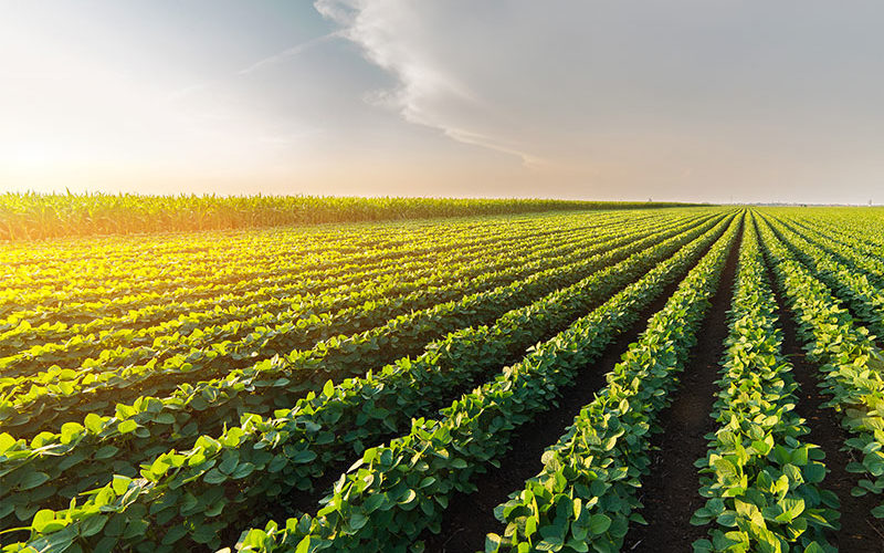 SV und Sompo International kooperieren bei Agrarversicherungen