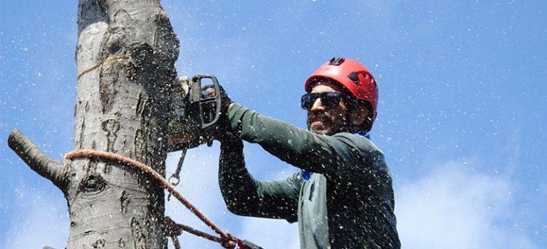 Baumfällkosten dürfen nicht auf Betriebskosten umgelegt werden
