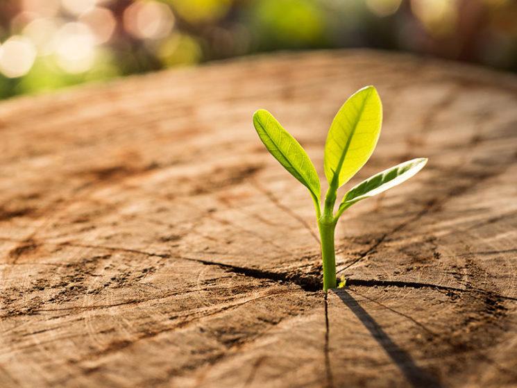 Nachhaltige Kapitalanlagen: Nachfrage steigt weiter