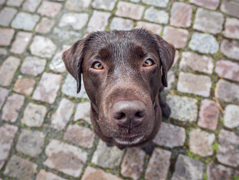 Adam Riese: Haftpflichtversicherung für Hundehalter
