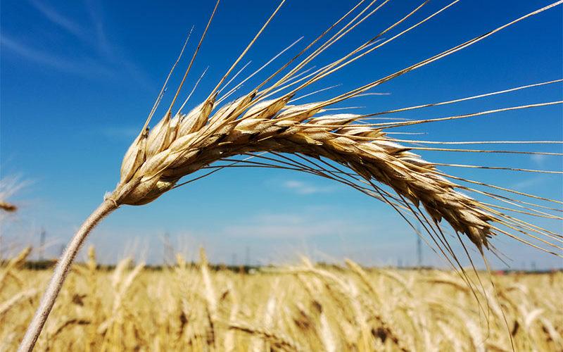 VKB: ErnteSchutz Vario bietet Absicherung für Landwirte