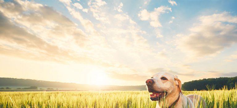 DFV startet Tierkrankenversicherung