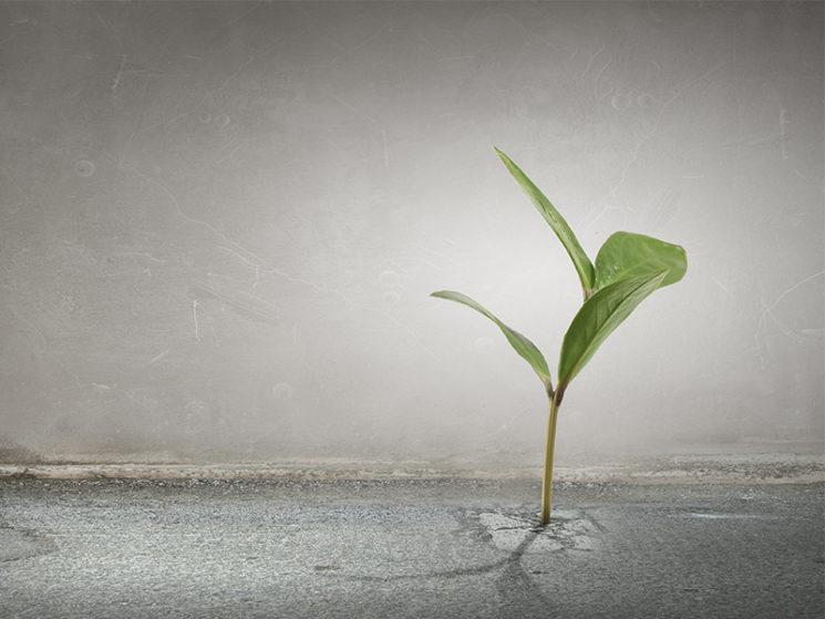 Haben nachhaltige Versicherungen eine Zukunft?
