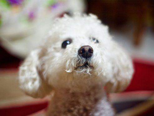 Die besten Hundehaftpflichtversicherungen