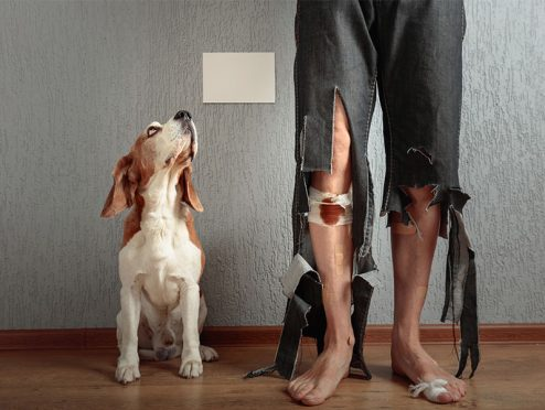 Die besten THV-Tarife für Hundehalter