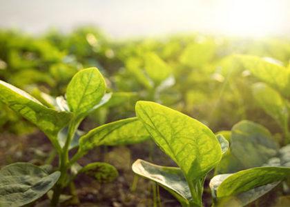 Eine neue Police für Biolandwirte, Biogärtner und Biowinzer