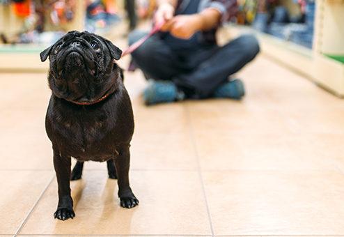 Neue Privat- und Hundehalterhaftpflicht bei Coya