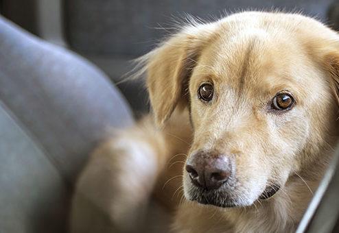 Tiere im Fahrzeug: Kein Anspruch auf Schadenersatz bei Rettungsmaßnahmen