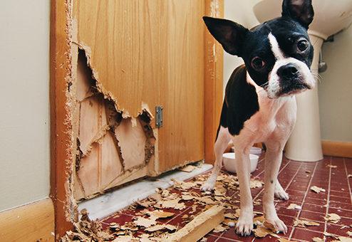 Coya: neue Haftpflicht für Hundehalter