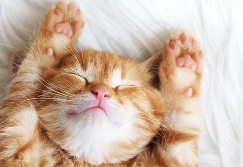 DFV erweitert Tierkrankenversicherung auf Katzen