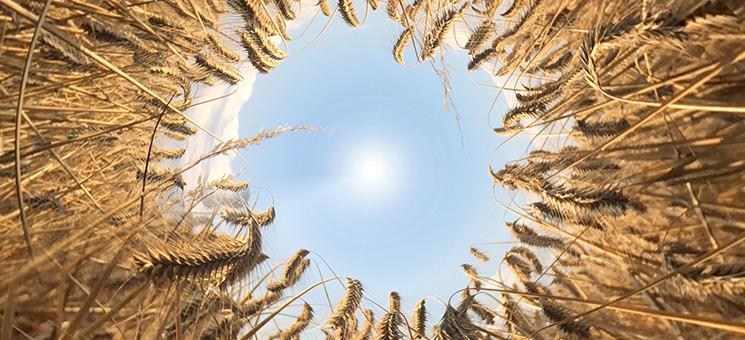 GHV und Mehrwert bieten neue Bio-Agrarversicherung