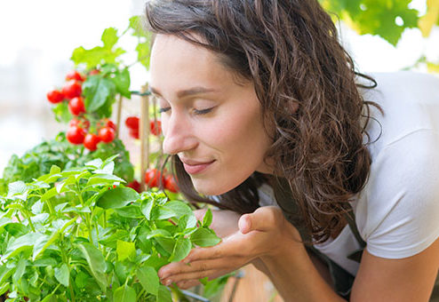 Selbstversorgung mit frischem Gemüse: was müssen Eigentümer und Mieter wissen?