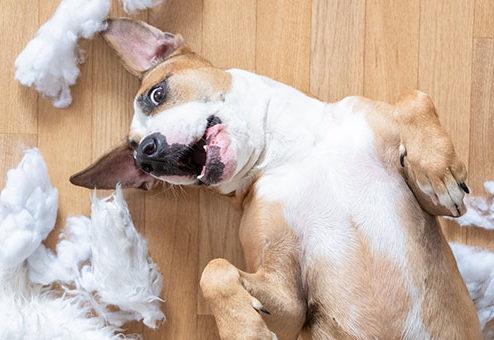 HDI: Neue Tierhalter-Haftpflichtversicherung mit Garantieleistungen