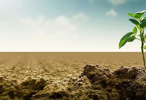 Welche Rolle spielen nachhaltige Versicherungsprodukte?