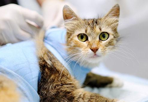 Tier-Operationskostenversicherung für Hunde und Katzen