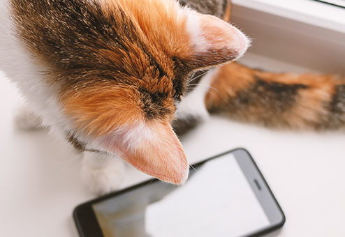 Coya launcht Krankenversicherung für Hunde und Katzen