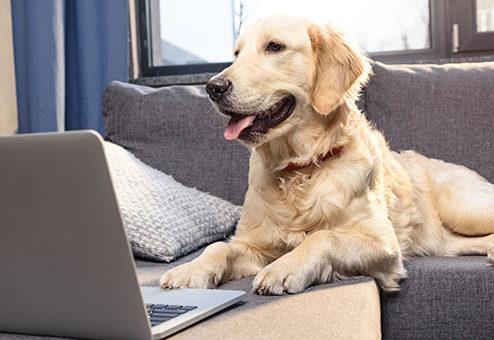 HUGOversichert von Hund für Hund