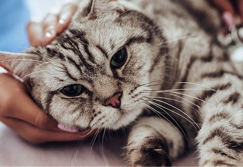 Tierkrankenversicherung: SantéVet will deutschen Markt erobern